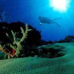 Derin Denizlerde Olup Bitenler