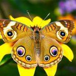 """Doğada ki """"Simetri ve Uyum Sanatı"""""""